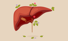 Myths about fatty liver disease